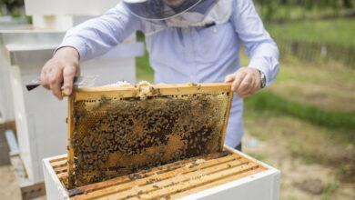 L'apiculture un créneau pour l'amélioration du revenu agricole