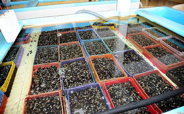 Aquaculture au Maroc, un secteur en quête du déclic